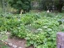 der erste Garten von Süd-Ost