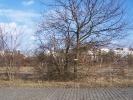 Bäume zwischen Betonpflaster und Schienen