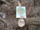 kletterbaum.jpg