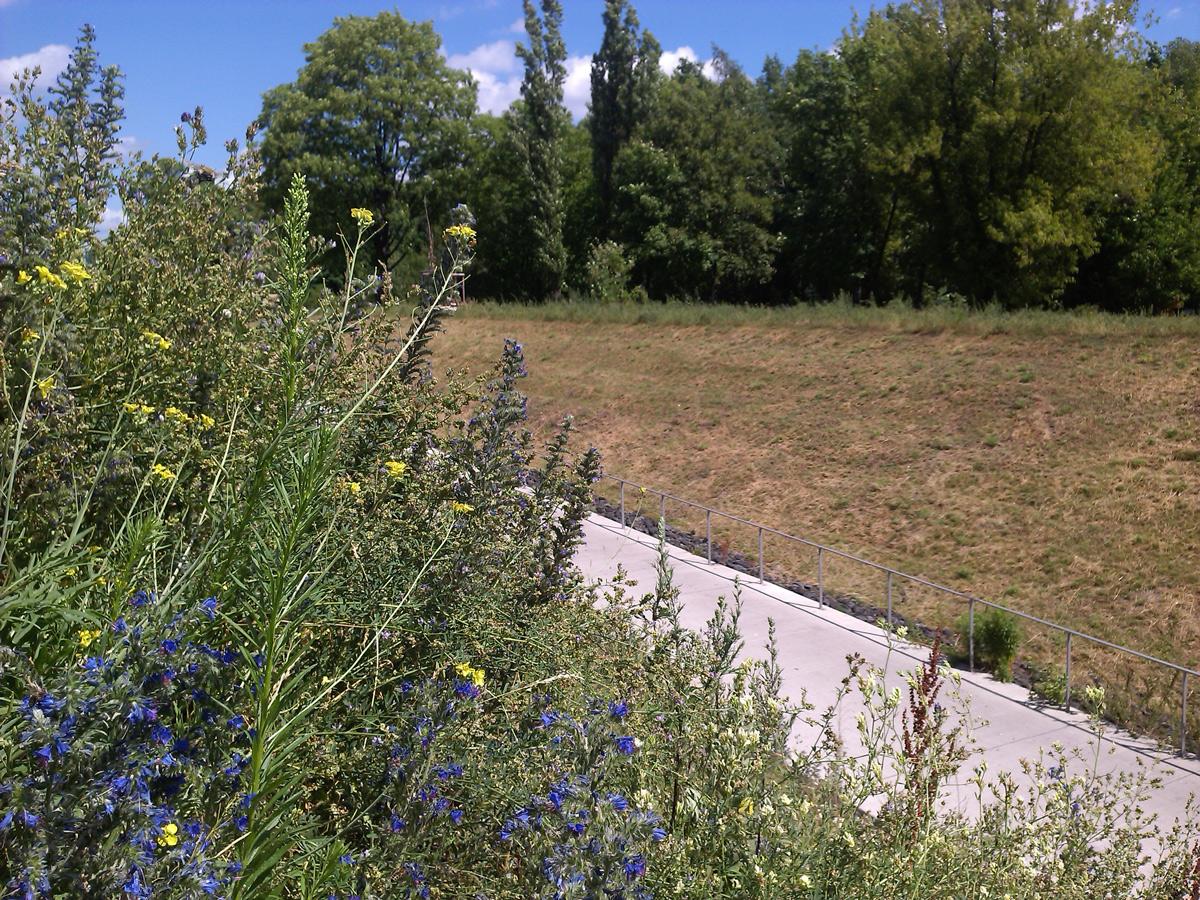 Wiildblumenwiese an der Rampe zum Ostpark, die östliche Seite ist schpn komplett abgemäht, auf der westlicchen Seite steht noch etwas.