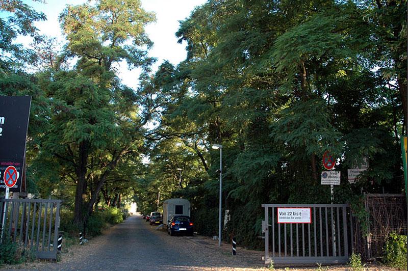 Die gepflasterte Zufahrtsstraße zum Lokdepot mit den alten Bäumen links und rechts